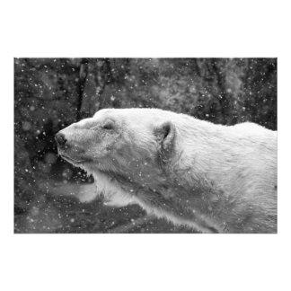 Peaceful Polar Bear Photo Print