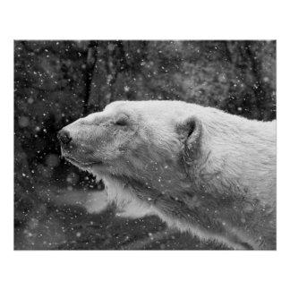 Peaceful Polar Bear Poster