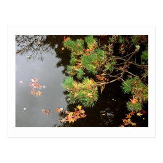 Peaceful Reflections - Yashiro Japanese Gardens Postcard