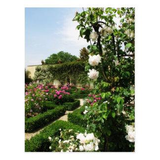 Peaceful Rose Garden Postcard