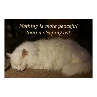 Peaceful Sleeping White Cat Poster
