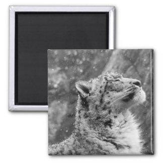 Peaceful Snow Leopard Magnet