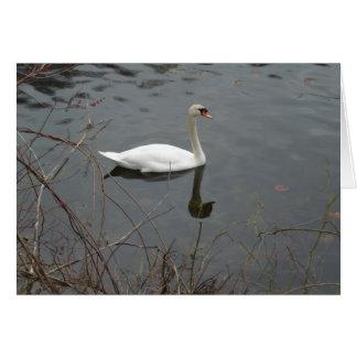 Peaceful Swan Card