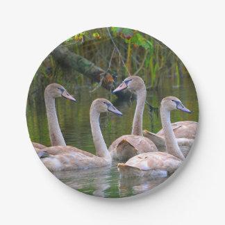 Peaceful Swan Paper Plate