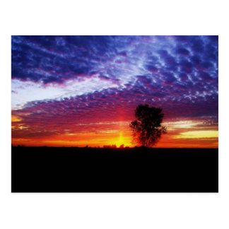 Peacemakers Dream Homestead Sunset Postcard