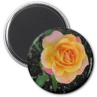 Peach and Orange Rose Magnets