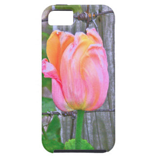 """""""PEACH AND PINK COLORED TULIP"""" CASE FOR iPHONE5/5S"""