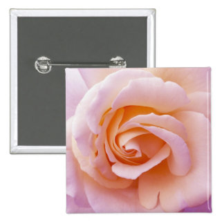 Peach and Pink English Garden Rose Pin
