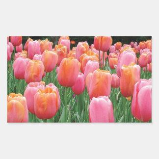 Peach and Pink Tulips Rectangular Sticker