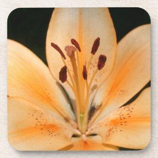 Peach Asiatic Lily Closeup Photo Coasters