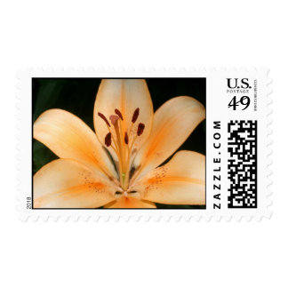 Peach Asiatic Lily Stamp