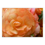 Peach Begonia Greeting Cards