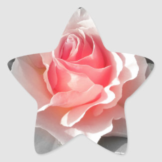 Peach Bliss Rose Star Sticker