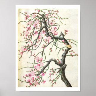 Peach blossom (colour on paper) print