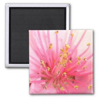 Peach Blossom Macro Refrigerator Magnets