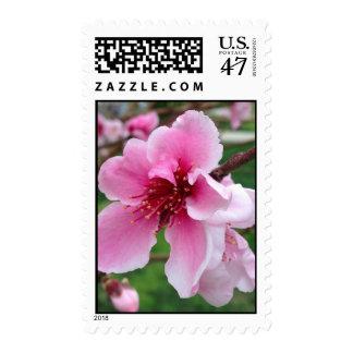 Peach Blossom Stamp