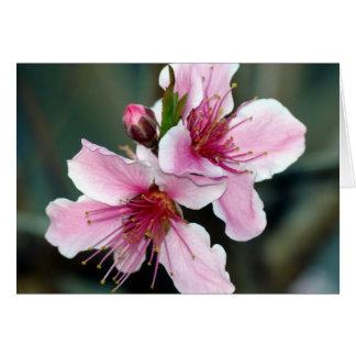 Peach Blossoms 072 - Card