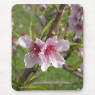 Peach Blossoms Mouse Pad