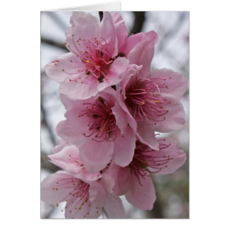 Peach Blossoms Stationery Note Card