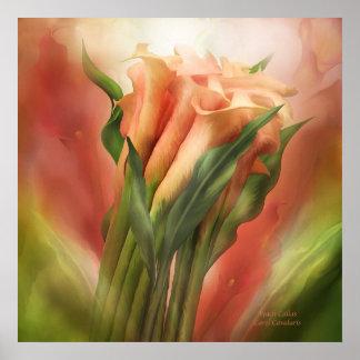 Peach Callas Art Poster/Print Poster