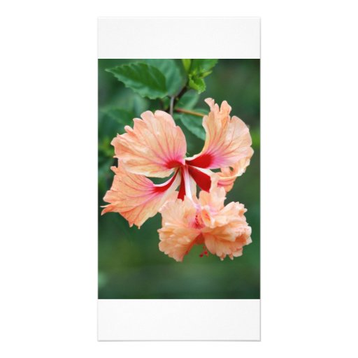Peach colored flower photo card