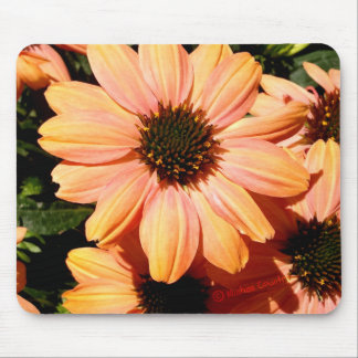 Peach Colored Flowers Mouse Pad