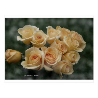 Peach colored rose bunch postcards
