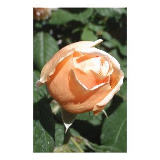 Peach Colored Rose Custom Stationery