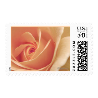 Peach Cream Rose Bud Spiral Wedding Postage