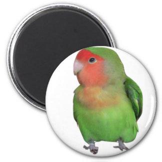 Peach-faced Lovebird 2 Inch Round Magnet