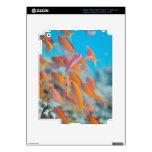 Peach fairy basslet iPad 3 decals