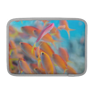 Peach fairy basslet MacBook sleeves