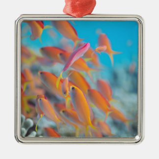 Peach fairy basslet metal ornament