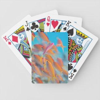 Peach fairy basslet card decks