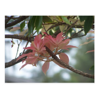 Peach Flowers 1 Postcard