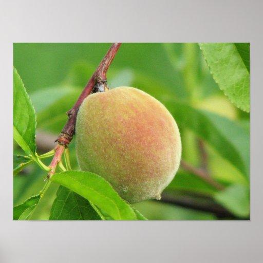 Peach Fuzz Poster