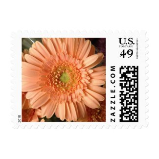 Peach Gerbera Daisy Flower Postage Stamp