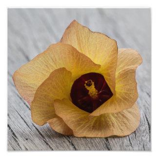 Peach Hibiscus Flower Photo
