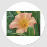 peach lily stickers