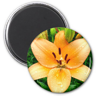 Peach Lily with Raindrops Magnet