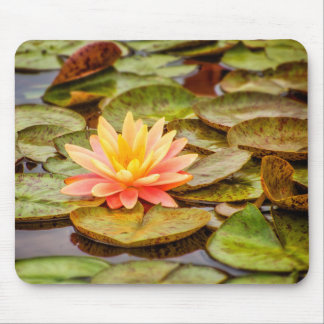 Peach Lotus Flower Mouse Pad