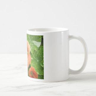 Peach Nasturtium Photograph Mug