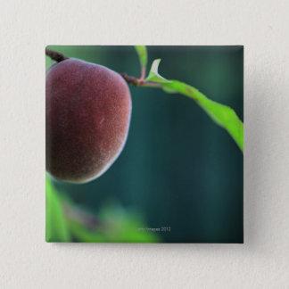 Peach on a peach tree pinback button