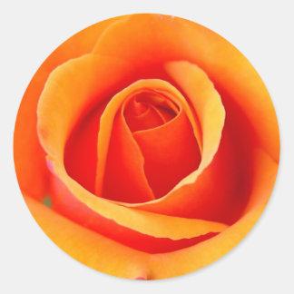 Peach/Orange Rose Sticker