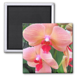 Peach orchids - Magnet