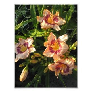 Peach Oriental Day Lilies Art Photo