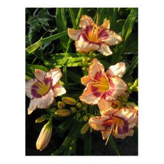 Peach Oriental Day Lilies Postcard