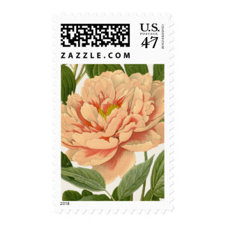 Peach Peony Stamp