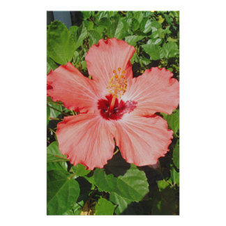 PEACH PINK FLOWER HIBISCUS CUSTOMIZED STATIONERY