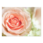 Peach Pink Rose Background Customized Photo Print